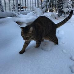 ねこ おかーたん。雪って楽しいよ💕 朝からずっ…