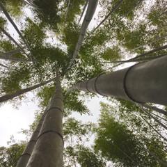 竹林/京都/おでかけ 京都の竹林。 下からのアングルは圧巻的😳