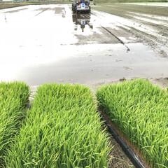 田植え 始まりました 田植えの時期 これから1カ…