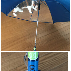 小学生/傘/梅雨 小学3年生。男の子 今年から傘がOKな学…