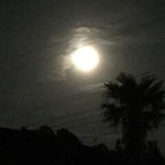 中秋の名月/月見団子/ススキ/ワレモコウ/コスモス 中秋の名月🌕 少し雲はありますが  見え…(2枚目)
