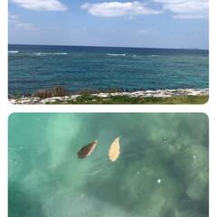 魚/海/おでかけ 今日は、とても良い天気だったので、北部ま…