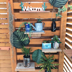 空き瓶/フェイクグリーン/廃材/グリーン/DIY/100均/... 先日UPしたラティスにグリーンを飾りまし…