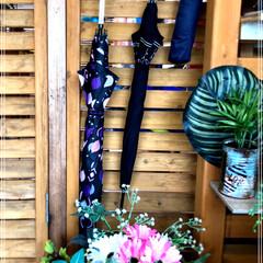 傘☂️/梅雨/100均/ダイソー/玄関/ハンドメイド 我が家では、100均で購入した壁用ハンガ…(1枚目)