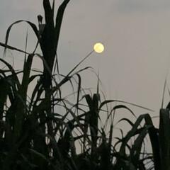 月/おでかけ さっき、車から見た月🌙🌙