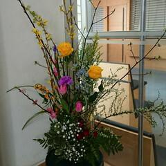 水盤/インテリア/アレンジ/フラワー/お花/花/... 1階 正面玄関の生け花です  れんぎょう…
