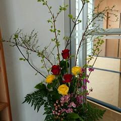 インテリア/アレンジ/フラワー/花/お花/水盤/... 1階 正面玄関の生け花です  虫狩と雪柳…