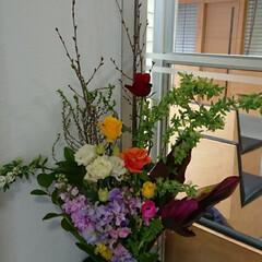 桜/水盤/華やか/インテリア/正面玄関/病院/... 1階 正面玄関の生け花です  桜咲く!今…