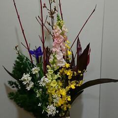 アイリス/待合室/病院/インテリア/フラワー/花/... 1階 待合室の生け花です  金魚草とアイ…