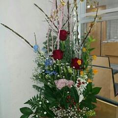 病院/水盤/正面玄関/活け花/花/お花/... 産婦人科病院の正面玄関の生け花です  聖…