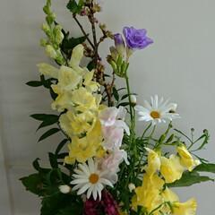 桜/フリージア/ラナンキュラス/マーガレット/待合室/病院/... 3階 待合室の生け花です  ラナンキュラ…