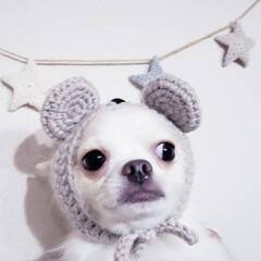 笑わない犬/嫌い/苦手/被り物犬/ねずみ年/新年/... 。⋆☃️*ᴴᴬᴾᴾᵞ ᴺᴱᵂ ᵞᴱᴬᴿ*…(2枚目)