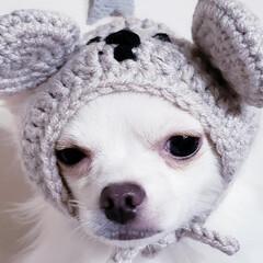 笑わない犬/嫌い/苦手/被り物犬/ねずみ年/新年/... 。⋆☃️*ᴴᴬᴾᴾᵞ ᴺᴱᵂ ᵞᴱᴬᴿ*…(3枚目)