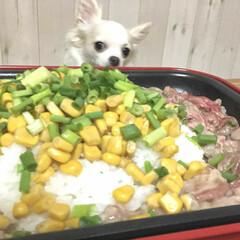 ホットプレート料理/ホットプレート/ペット/犬のいる暮らし/チワワ/わんこ同好会/... 手抜きご飯。  美味しいかも🤗