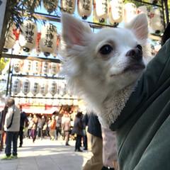 犬のいる暮らし/お正月/帰省/鏡餅/おみくじ/新年/... 初詣⛩️ みーんな吉でした😊 あんまりい…