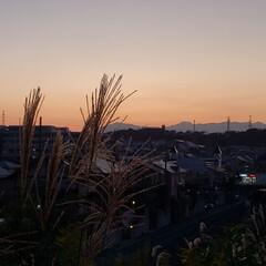 お散歩/富士山/空/夕焼け/夕日/風景/...