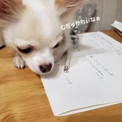 邪魔/お勉強中/もうすぐ2才/ねこ好き/犬好き/小型犬/...