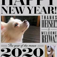 笑わない犬/嫌い/苦手/被り物犬/ねずみ年/新年/... 。⋆☃️*ᴴᴬᴾᴾᵞ ᴺᴱᵂ ᵞᴱᴬᴿ*…