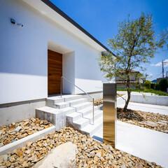 生活/外構工事/ロックガーデン/オリーブ/新築一戸建て/住宅/... 自粛明けてオリーブの植栽、ロックガー…(3枚目)