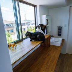 廊下/ねこ/カウンター/手洗い/洗面台/マイホーム/... 2階トイレ前の手洗いカウンター、下は猫ち…(5枚目)