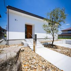 生活/外構工事/ロックガーデン/オリーブ/新築一戸建て/住宅/... 自粛明けてオリーブの植栽、ロックガー…(2枚目)