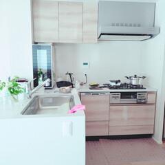 おうちの美化委員/台所/今朝の様子/日常/暮らし/キッチン お弁当のおかずを作って 冷ましているとき…