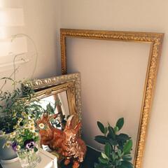 おうちの美化委員/掃除/インテリア/飾り/片付け シンプルなお部屋が好きですが、家にある物…