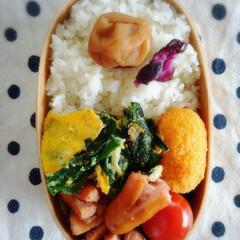 曲げわっぱ まげわっぱ 弁当箱 名入れ無料 |判型一段 弁当箱 小さめサイズ PH01SW(弁当箱)を使ったクチコミ「本日のお弁当記録。 ニラ玉 小松菜とウィ…」