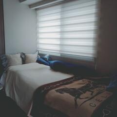 部屋/おうちの美化委員/朝一番の片付け/片付け/ベッド/簡単/... 今朝は曇り☁ 起きたらすぐにささっとベッ…