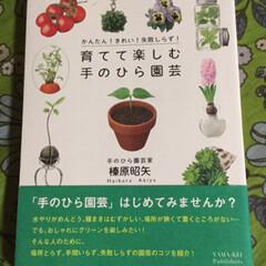 園芸/盆栽/発芽/松ぼっくり 先日ネット見てたら松ぼっくりから芽が出て…