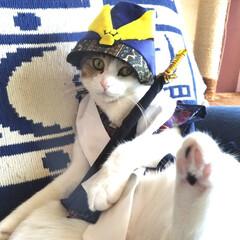 猫侍/猫/端午の節句/こどもの日/令和の一枚/フォロー大歓迎/... 3歳の端午の節句🎏 キリッと武士になりき…