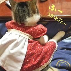 猫服/猫背/手作り/LIMIAペット同好会/フォロー大歓迎/ペット/... 家事に疲れたお母さんみたいな後ろ姿だねw…