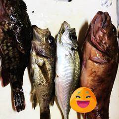 魚 釣りたての魚🐟貰いました 煮付けにします