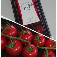 トマト/フード/グルメ
