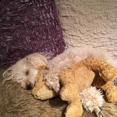 おやすみショット IKEAで見つけたチーター?を抱いて熟睡…