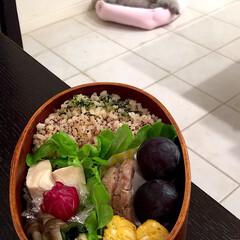 お弁当/時短レシピ 娘弁当♡ 玄米ご飯 高野豆腐 レンチン煮…