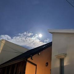 お散歩/夕飯/猫/お花/満月 今朝は曇りだったから涼しいかなぁとおもっ…(4枚目)