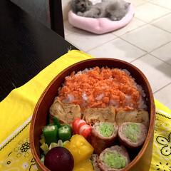 愛犬/お弁当 娘弁当♡ 鮭フレークのせご飯 卵焼き キ…