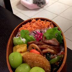 愛犬/お弁当 娘弁当♡ 鮭フレークのせご飯 卵焼き れ…