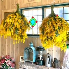 ステンドグラス/ミモザ 庭のミモザ の花のピークも過ぎて、最後に…