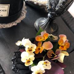 器好き/器/伊藤剛俊/黒い器/ピッチャー/テラコッタ/... いよ冬到来 日に日に庭の花は少なくなって…