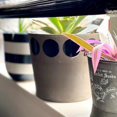 SALUS ブリキバケツ ミニ(バケツ、ポリバケツ)を使ったクチコミ「雨が降る日のインテリア雑貨の ハンドメイ…」