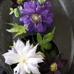 なんでも使おう/拘りなし/八重咲きクレマチス/トレイ/クレマチス/花のある暮らし/... 今日の雑貨  物の使い方に あまり拘りが…