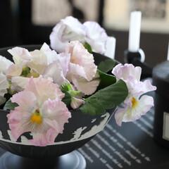 海外インテリア/北欧インテリア/インテリア/北欧/ウエッジウッドジャスパー/ウエッジウッド/... 春といえばピンク 春のピンクは淡色が好き…
