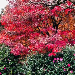 朝の散歩/朝/寒さが増す/紅葉/旅/長野/... 旅の景色  長野軽井沢方面 長旅中 とっ…