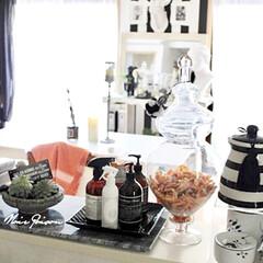 白黒インテリア/台所/ペットと暮らすインテリア/キッチンを見せて/キッチン雑貨/ペット/... キッチンを見せて 部屋全体およびキッチン…