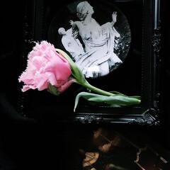 ディスプレイ/ピンクマジック/ピンク/チューリップ/花/イマニワ/... 今日は肌寒いですね。 冬に植えた球根がち…
