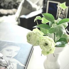 イマニワ/癒し/ホワイトインテリア/ホワイト/インテリア雑貨/モノトーンインテリア/... インテリアの一つ ガーディニング😊 庭の…