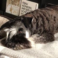日々の出来事/おやすみ/ウトウト/ソファー/犬/ペットのいる暮らし/... 先週末の旅行の疲れか ウトウトまったりな…