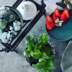 野菜の切れ端料理/信楽/青い器/テーブル/旬の野菜/イチゴ/... 野菜の不思議🥬  何十年も青梗菜調理…